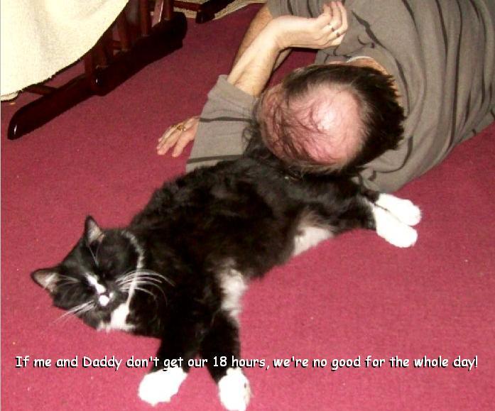 Daddy_Cat.JPG