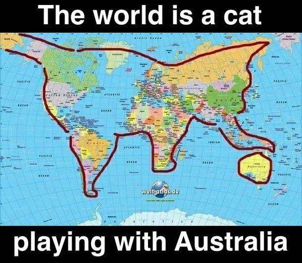 Playing Cat.jpg