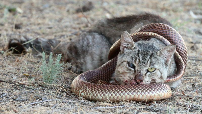 cat-v-mulga-snake-hero.jpg