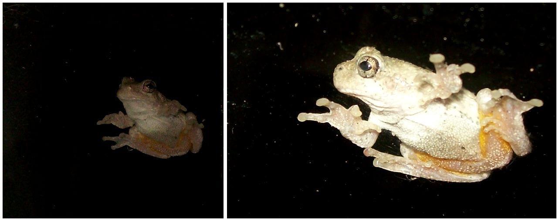 froggy3.JPG
